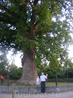 Это мы с Сережкой (сыном) у тюльпаногого дерева в Головинке