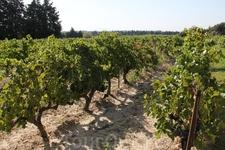 По дороге решили заехать на винодельню. Заодно вышли посмотреть на виноградники.