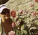 просто так идешь по улице..розы растут..))