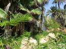 Ранее парк насчитывал более 7 000 пальм, но потом началось строительство железнодорожного сообщения Мурсия – Аликанте, торжественно открытого в 1884 году, а затем и расширение морского порта. А так же строительством алюминевой фабрики ENDASA в период с 1952 1956 года. И все это привело к тому, что количество пальм сократилось.