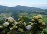 Символ Азорских о-вов - гортензии. Красивейшее место - Sete Cidades, о.Сан-Мигел