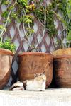 Кошки Линдоса