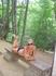 Отдых в лесу!