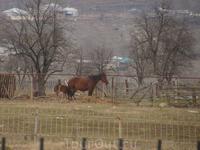 просто лошадка