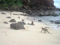 Обезьянки на Monkey Beach, Ко Лан