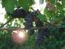 В каждой бутылке Кьянти тосканское солнце