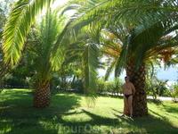 ананасовые пальмы