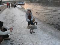 Набережная Влтавы. Гуси-лебеди. С одним из них. Замерзли оба