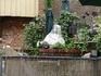 Скульптура перед входом в кафе на воде,ступеньки слева. Кафе расположено под единственным домом с деревянным фасадом, фото дома есть выше.