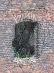 Это окно второго этажа, но даже там уже выросло дерево.