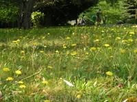 В парке. Красивая полянка