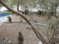 Пингвины в океанографическом центре