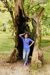 Дерево изнутри сгорело