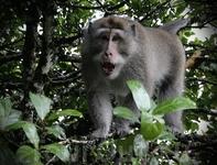 о. Бали. Лица-2