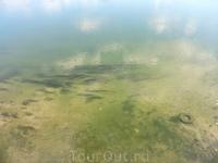 Вода чистая и прозрачная, видно рыбок. Но дно в Днестре илистое