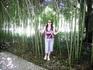 Сухум. Ботанический сад. Бамбуковая аллея.