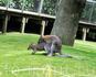 +21!!! Жизнь есть жизнь! В зоопарке много молодняка