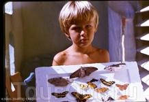 кубинские бабочка. самолично.