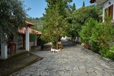 В программу экскурсии на Джип-сафари входит посещение мужского монастыря. В нем проживает всего один монах и десяток кошек))