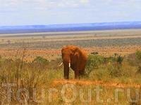 """Слоны всё таки,самые замечательные животные саванны,и выглядят """"монументально"""" и позируют охотно.:))"""