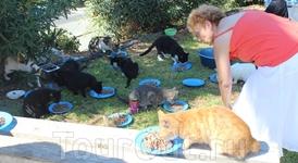Волонтеры приходят ежедневно, приносят корм и тарелки, кошки это знают, а вода стоит тут постоянно, так же, как и куб для пожертвований на кошек. Вообще ...