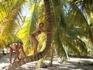 остров Саона в Карибском море