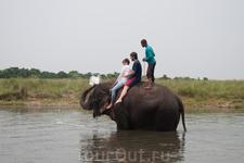 купание со слонами. Читван