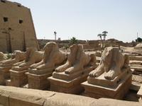 Карнакский храм. Одним из наиболее почитавшихся животных в Египте был баран, который (наряду с быком) издревне считался символом плодородия. Священнный образ барана чаще всего ассоциируется с именем А