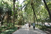 Улица-ботанический сад.