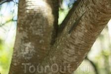 Маврикийская эндемичная ящерица - Mauritian Day Geko. Эти животные - не редкость в маврикийских садах и даже... в домах.