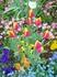 Апрель, а уже во всю цветут тюльпаны