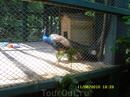 Павлуша. Большой не красивый попугай так сказал один мальчик.