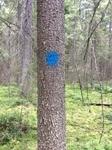 На деревьях синие отметки - чтобы понимать, куда идти.