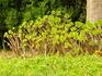 удивительные растения парка Marimurtra