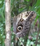мексиканские бабочки