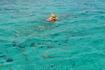 скнорлинг в Карибском море