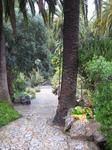 Каменные дорожки, по краям которых растут величественные пальмы.