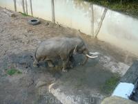 слон, к сожалению в отдельном закрытом вольере. ему строят огромную площадку