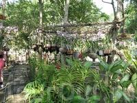 ферма орхидей на пхукете
