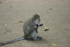 Краби, у Храма обезьян