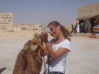 Четырех месячный  верблюжонок.