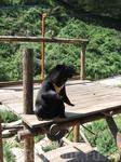 Китай, Далянь. зоопарк. вообще медведи в этом зоопарке очень общительные) даже станцуют ради еды