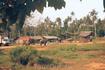 Ферма слонов