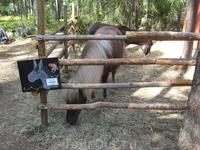 Вот эти милые лошадки понравились мне больше.