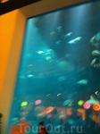 Аквариум в Дубае-молл