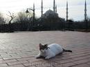 Стамбул - город в двух частях света