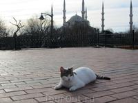 первое утро в Стамбуле