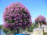 В парке на каждом шагу невероятно красивые цветы и вот такие деревья