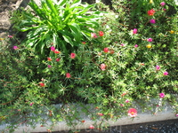цветники на Лилии