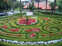 вот такая красота перед отелем Опатия